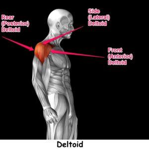 best rear deltoid workout