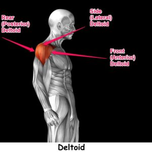 Rear Deltoid Workout: The 2 Best Rear Delt Exercises For Shoulder Health & Better Posture